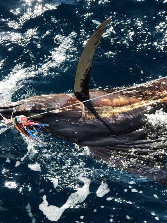 sailfish boats south africa fishing report durban 25 30 april 2017
