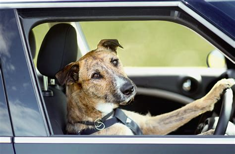 driving dogs intoxicated claims was driving