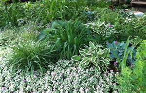Daylilies For Shade Hostas Daylilies And Shade Tolerant Ground Covers Such As