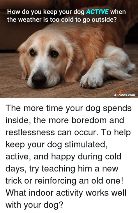 how do you keep your dog off the couch 25 best memes about restlessness restlessness memes