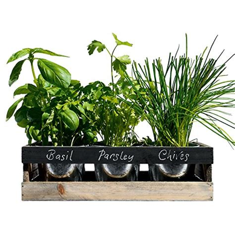windowsill herb garden kit indoor herb kits image for windowsill herb