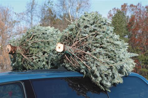 recycling artificial trees 11729 dnrec reminds residents tree recycling carries on for 2017 18 cape gazette