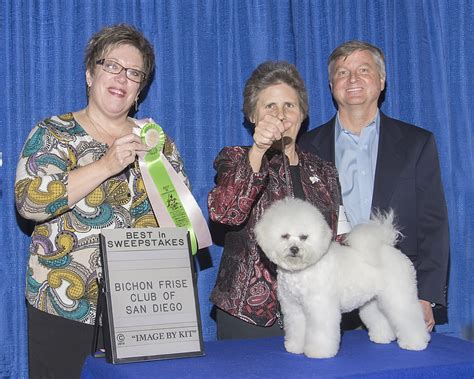 Best Sweepstakes 2014 - dee dee wins best in sweepstakes hollyhock bichons