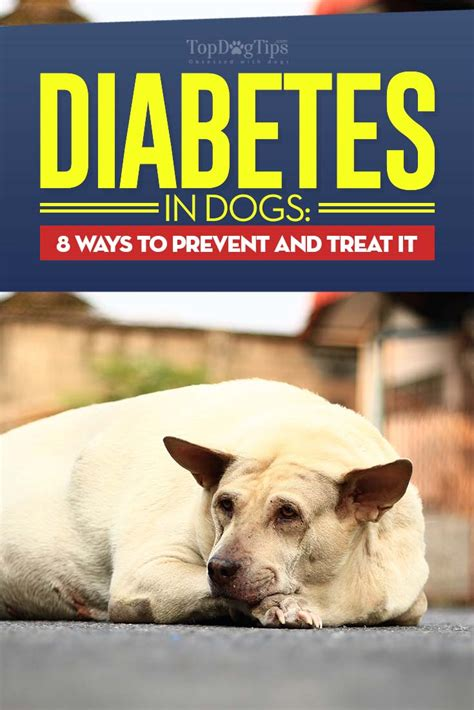 diabetes in dogs diabetes in dogs 8 ways to prevent and treat canine