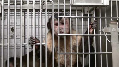Massachusetts Housing Court Records Massachusetts Supreme Court To Hear Peta Lawsuit On Primates In Labs Peta
