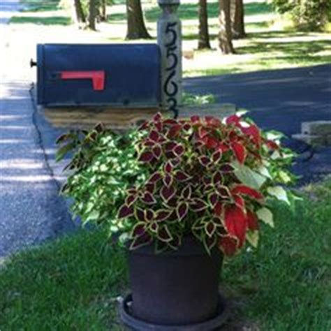 Mailbox Planter Ideas by 1000 Images About Mailbox Ideas On Mailbox Planter The Mailbox And Mailbox Flowers