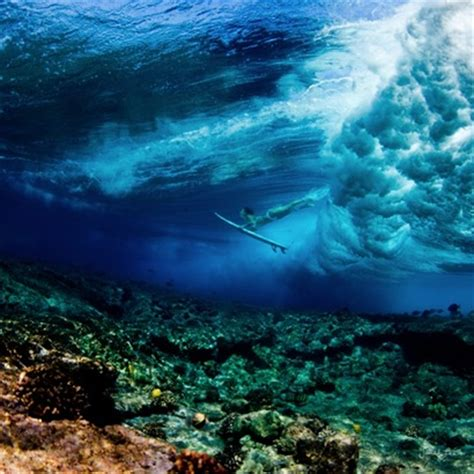 cool underwater photography   vuing.com