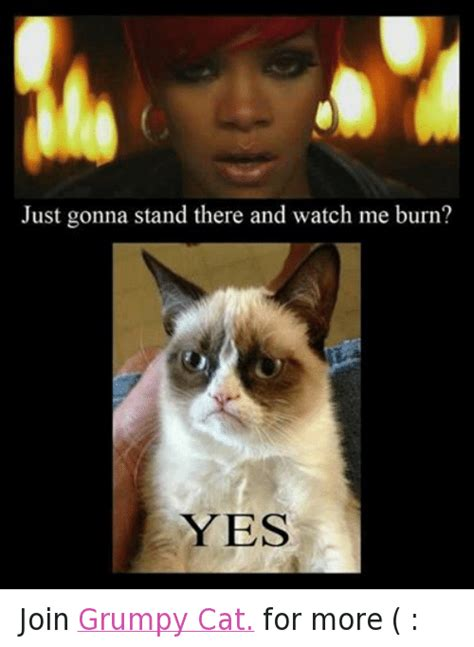 grumpy cat joins cats on angry cat meme yes www pixshark images galleries