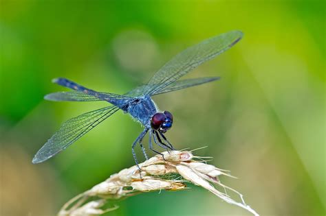 images of dragonflies what s a dragonfly habitat like what do dragonflies eat