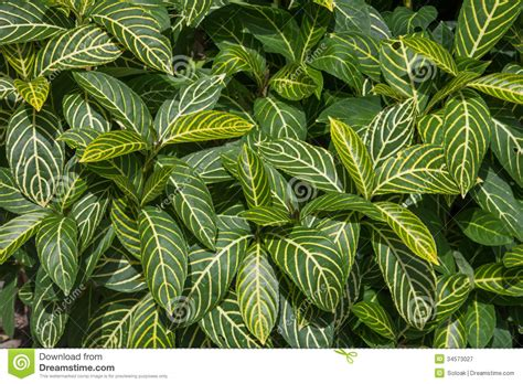 related keywords suggestions for houseplants related keywords suggestions for marantaceae plants