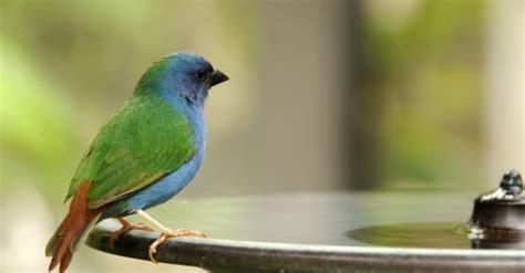 vögel im garten bestimmen vogel im garten kann nicht fliegen die neueste