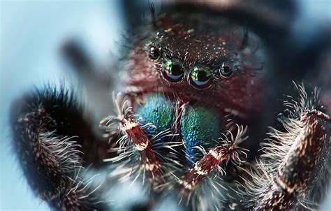 cool spider pictures