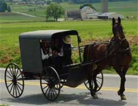 why the amish dont get sick things you can learn from why the amish don t get sick things you can learn from