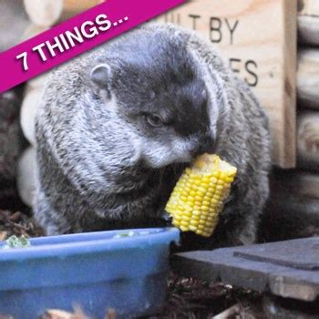 groundhog day debbie seven things you didn t about groundhog day radar