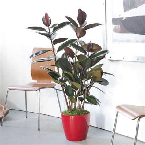 Red And White Bedroom Ideas choosing the best indoor plants for your interior