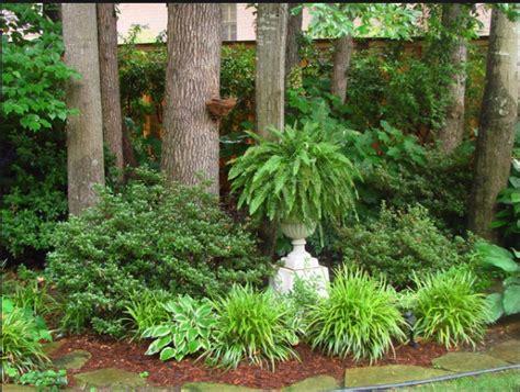 fern  concrete urn gardensgardening  plants