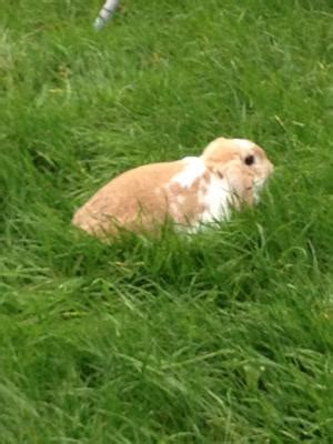 rabbit bread and age for my rabbit luna please