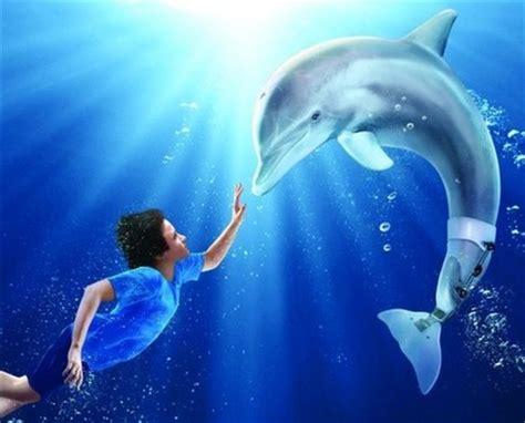 charitybuzz meet winter  hope   dolphin tale