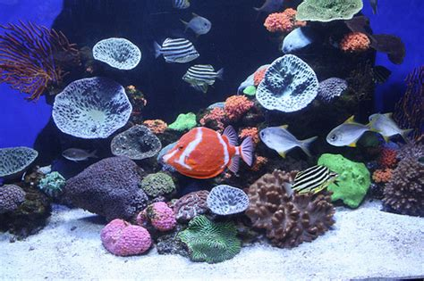 marine aquascaping techniques aquascaping techniques tips and thoughts news reef