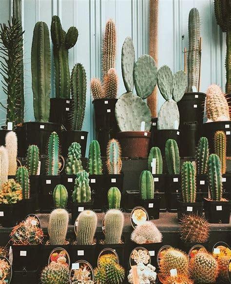 17 best images about plantas on pinterest los gatos muchos cactus ideas para decorar pinterest cactus