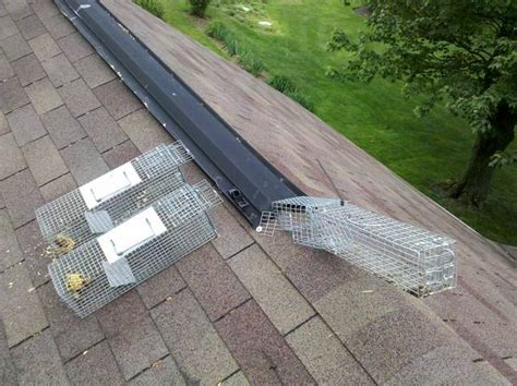 Shed Roof Ridge Vent by Squirrel Ridge Vent Set Up Pics Adc Forum Trapperman