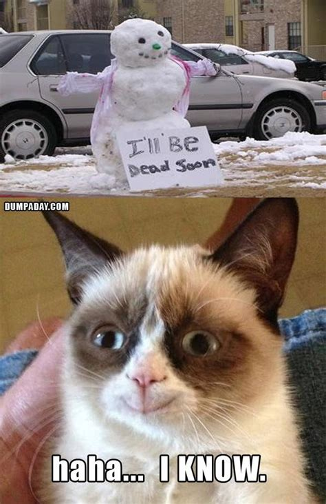 funny christmas pictures  pics