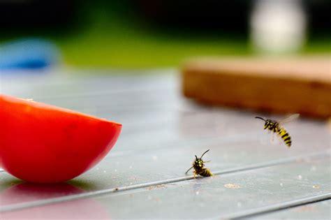 Insekten Im Haushalt 4051 by Insekten Im Haushalt Silberfischfallen Ungeziefer Im Haus