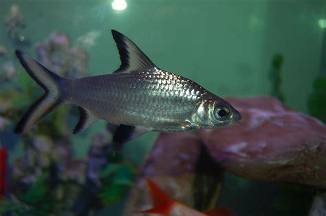 best of my aquarium part 2 aquarium recipeapart