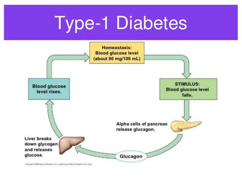 Diabetes Feedback Loop Diagram