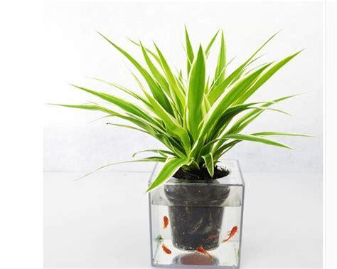 gratis pengiriman  cm pot besar pot bunga kreatif