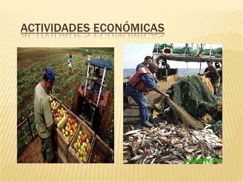 Imagenes De Nuevas Ideas Economicas | actividades econ 243 micas agricultura