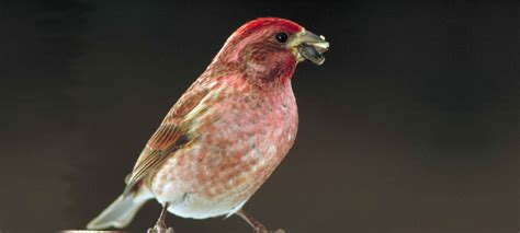 10 tips for encouraging attracting birds to try a new