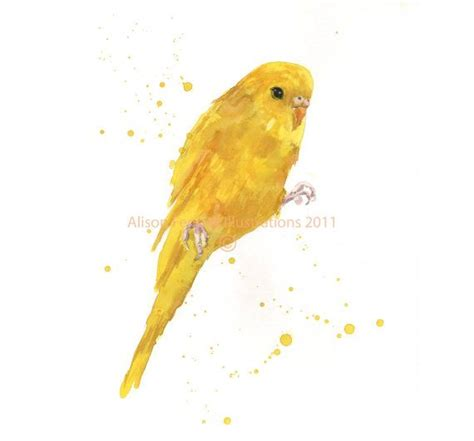 melbourne designs budgie and yellow parakeet watercolor print bird lover gift