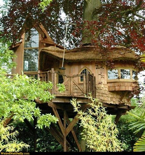 elf house on a tree funny pictures weirdnutdaily elf treehouse