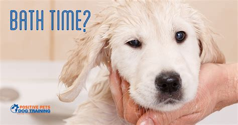how often can i bathe my puppy when should i bathe my positive pets