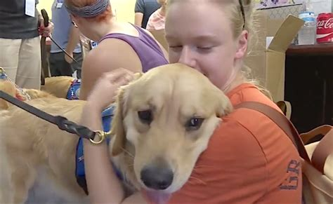 canine comfort comfort dogs have flown from all over the country to