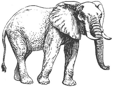 Gajah Putih sumpahan tok kadok lagenda gajah putih mahkota alam