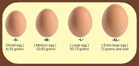 protein values protein values of an egg archives health banana