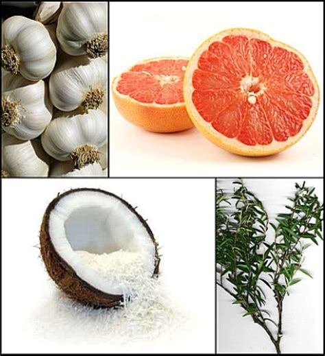Garlic And Hair Shedding by Garlic Coconut Vinegar Tea Tree Grapefruit How To