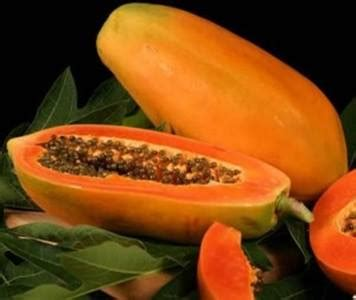 Benih Pepaya Golden Import benih buah buahan fresh nature