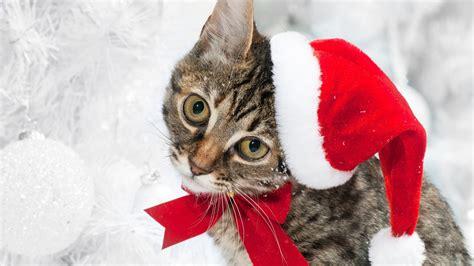 christmas cat wallpaper  images
