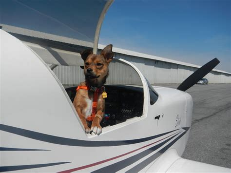flying with dogs flying with pets archives aviation insurance resources