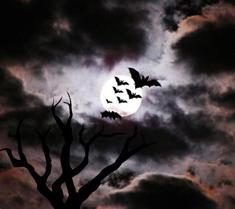 imagenes de bajinas oscuras encontrando me com augusto dos anjos alfarrabios de um