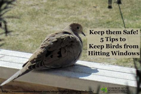 stop birds hitting windows total survival