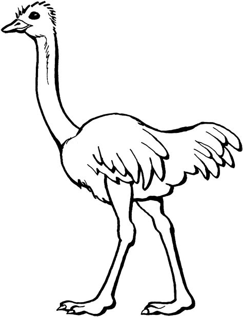 coloring pages of free printable ostrich coloring pages for