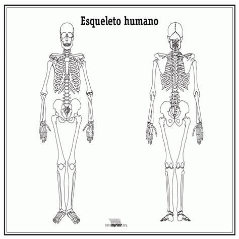 imagenes educativas del cuerpo humano esqueleto humano sin nombres para imprimir colorear website