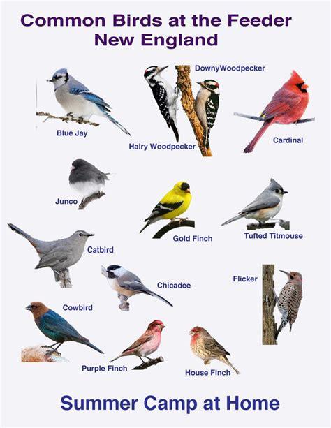 backyard bird finder bird watching challenge and bird book bird identification bird book and bird watching