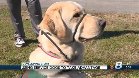 can service dogs in go anywhere veteran project veteran project news