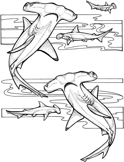 sea animals printable coloring pages sea animals coloring pages epic