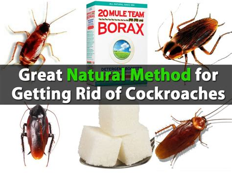 great method for getting rid of cockroaches diy